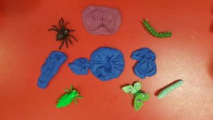 Bug fossil making